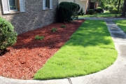 yard cleanup north augusta sc