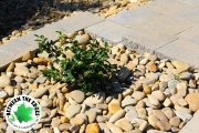 Landscaping-closeup-Between-the-Edges-NorthAugustaSC