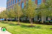 commercial landscaping north augusta sc