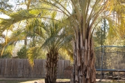 Palms-close-up-Between-the-Edges-AugustaGA-NorthAugusta-SC-landscaping-maintenance
