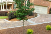 1_dogwood-and-landscaping-with-new-paver-driveway-in-background-Between-the-Edges-landscaper-Augusta-GA