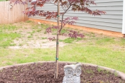 Japanese-maple-tree-installation-landscaping-project-Between-the-Edges-North-Augusta-SC